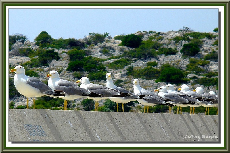 Seagulls in the dock